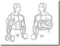 hammer-curls-for-serious-arm